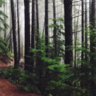 path-trees-140x140 New Carbon Offset Plugin Aims to Make WordPress Sites More Eco-Friendly design tips